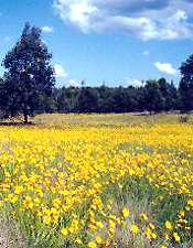 Wildflowers near Blackbutt